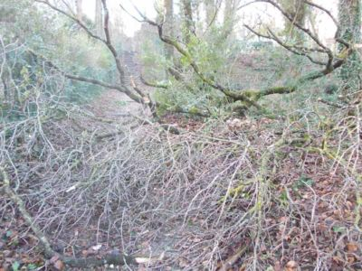 branches interdisant le passage dans l'allée des muguets